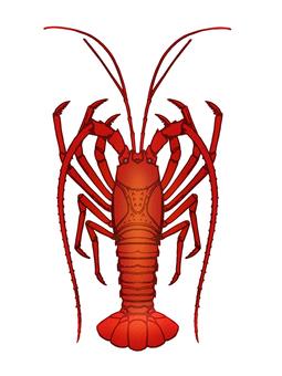 Ise shrimp