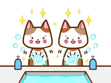 Good friend cat hand washing