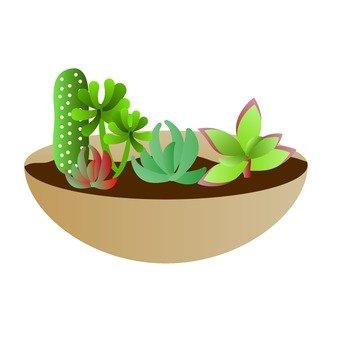 Picking cactus