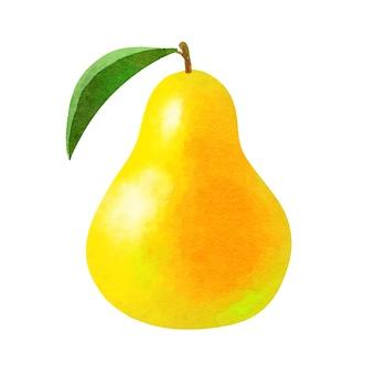 Watercolor ingredients series pear