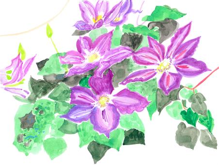 紫色的花1