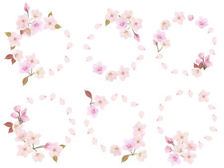 Cherry blossom, spring, cherry tree