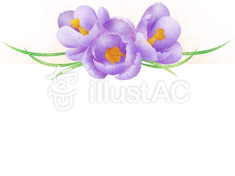 クロッカスの花の水彩風塗りフレーム