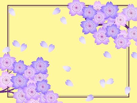 Cherry blossoms ④