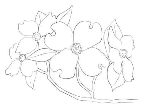층층 나무의 꽃