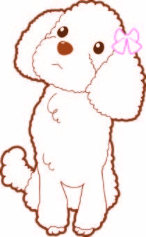 Toy Poodle - Coloring