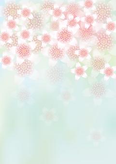 벚꽃의 꽃 113