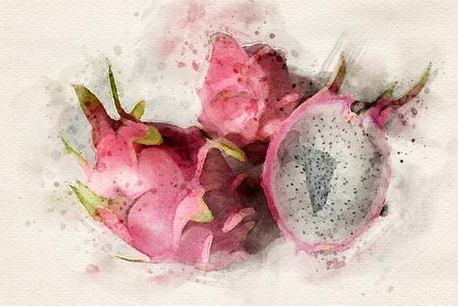 [Watercolor] Dragon fruit
