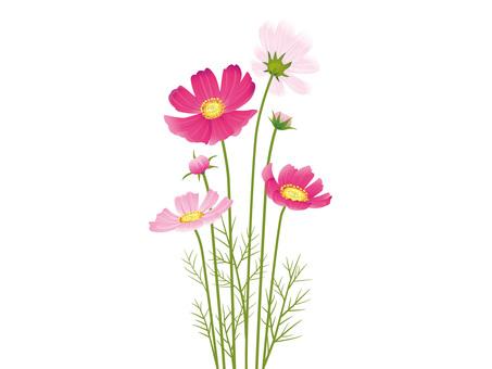 가을의 꽃 코스모스 자르기 01
