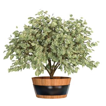 관엽 식물 08
