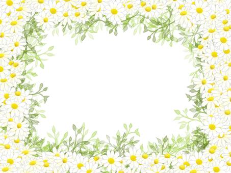 Chamomile frame