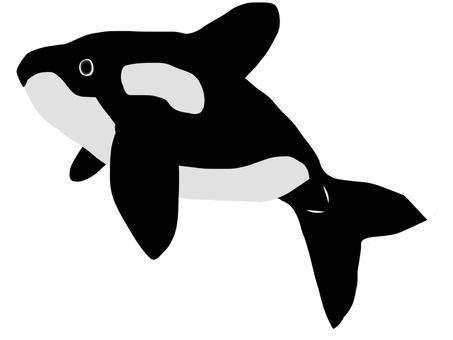 Okinawa fellow orca