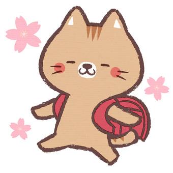 貓科動物糖果細胞(紅色)