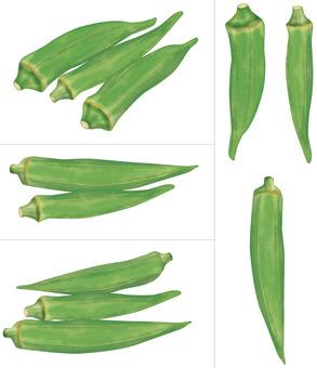 Okra / Vegetable