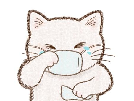 Cat hay fever