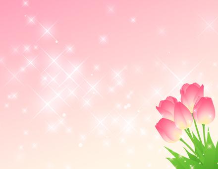 튤립 _ 핑크 배경