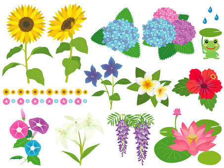 Early summer and summer flower set