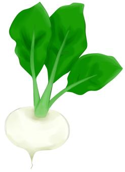 Turnip (no wire)