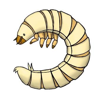 Cute little worm