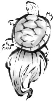 Tortoise 001