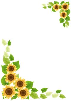 Sunflower 99