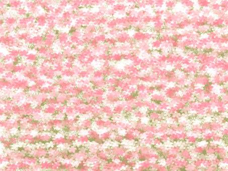 벚꽃 무늬 질감 6