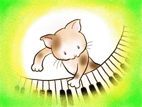 Piano cat 15