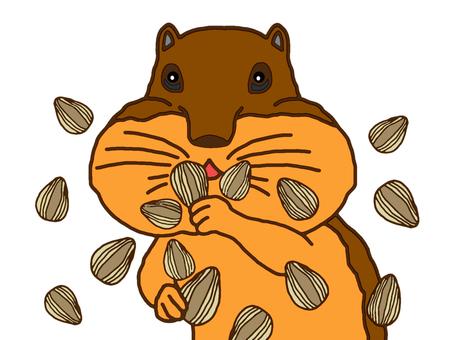 해바라기 씨앗을 먹는 다람쥐