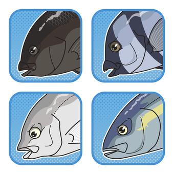 Marine fishing moat fish