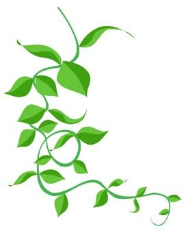 Ivy ①