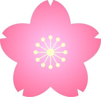 Sakura ① Petals