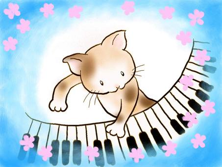 Piano cat 16