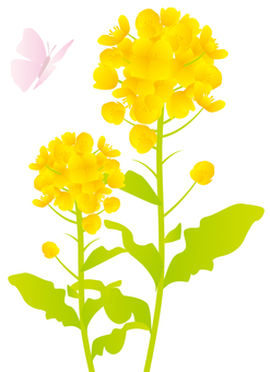 強奸的花朵