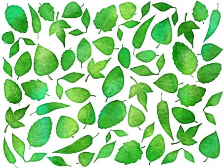 신록의 나뭇잎들은 여러