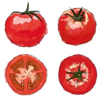 수채화 화풍 토마토