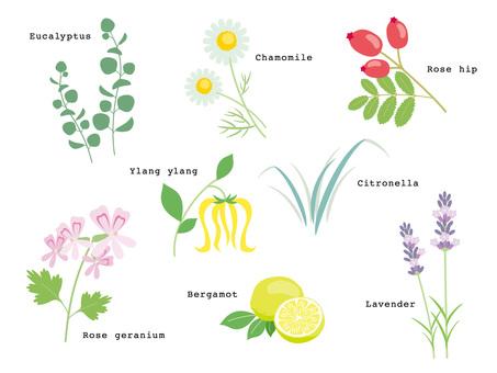 Various Herbs _ 02