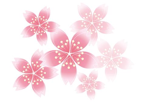 Sakura Sakura 2