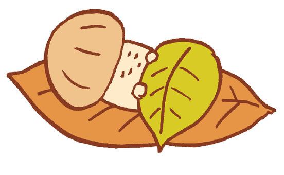 蘑菇睡在床上的葉子
