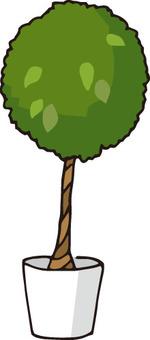 관엽 식물 (벤자민)