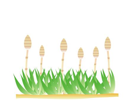 Tsukushi and grass