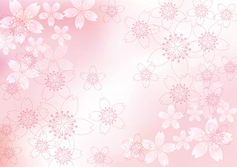 벚꽃의 꽃 52