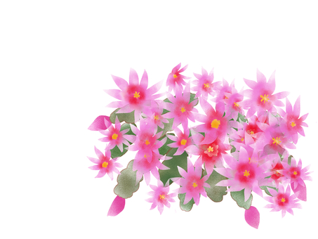 Easter Cactus