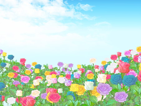 Background of colorful roses
