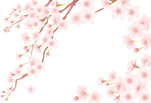 벚꽃 프레임 1703