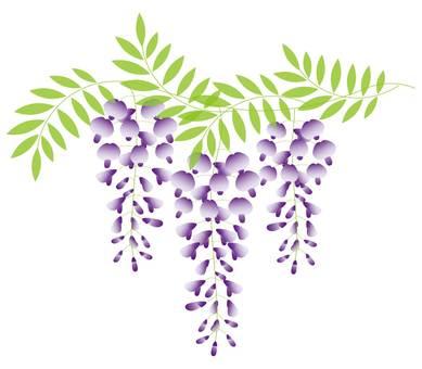 wisteria_purple_02