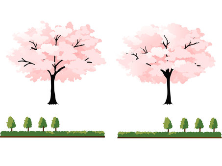 Cherry Tree and Plant Parts