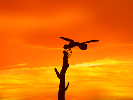 日落和蜻蜓