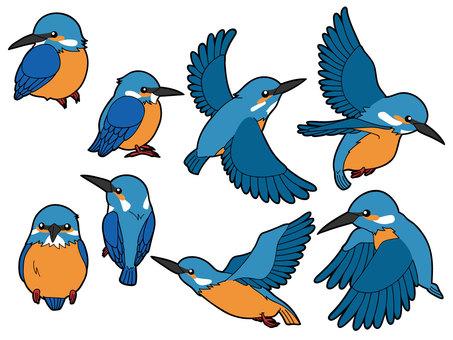 물총새 8 종