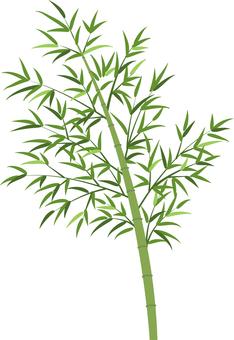 Bamboo, rattan illustration transparent ant