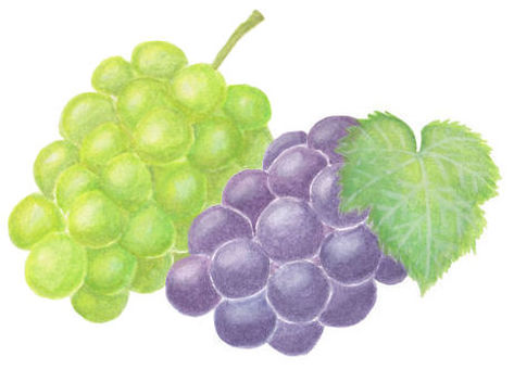 Two grapes
